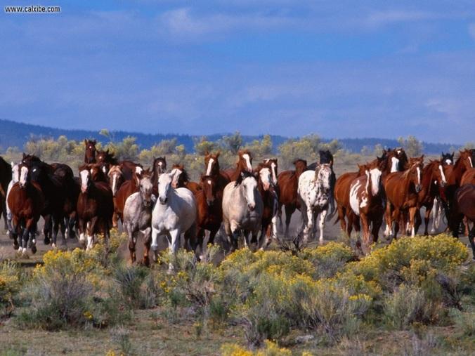 Herd_of_Horses.jpg